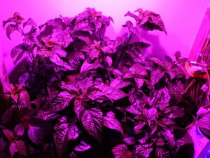 Plants grow extremely well under my new grow light